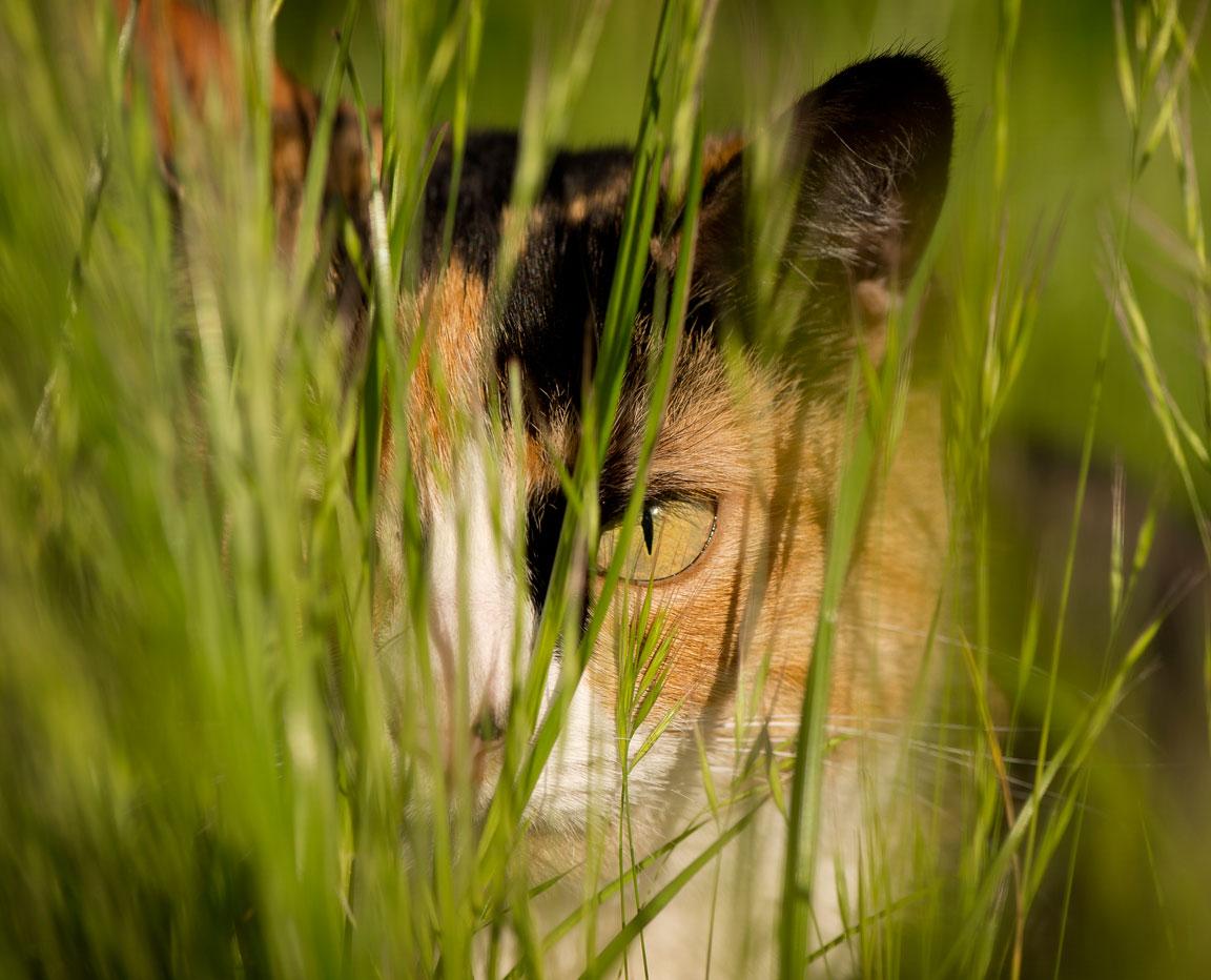 web-Camouflage-Cat