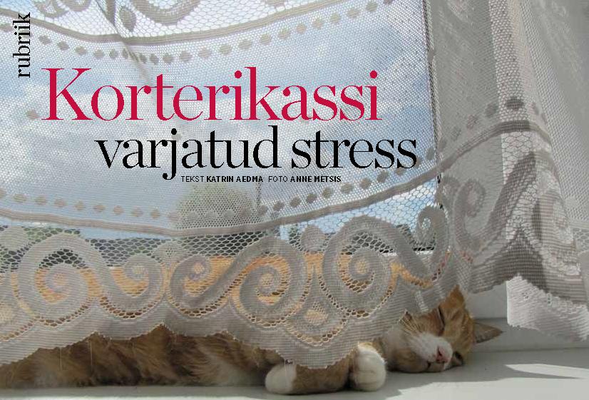 kassi-stress